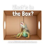 Whats in the Box Bible Game